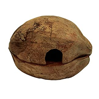 Namiba Terra Froggy-Home 0411 Coconut-Shaped Den for Reptiles, Amphibians or Small Animals, 2-Piece, Lies Horizontally Namiba Terra Froggy-Home 0411 Coconut-Shaped Den for Reptiles, Amphibians or Small Animals, 2-Piece, Lies Horizontally 51uk9CM58pL