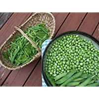 Virtue 200 Little Marvel Peas, Plant Spring and Fall ! Organic, Heirloom, Non Gmo, untreated !