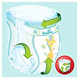 Pampers Baby-Dry Pants Gr.6, 16+kg, 76 Windeln, 76 Stück, 1 Packung=1 Impfdosis - 4