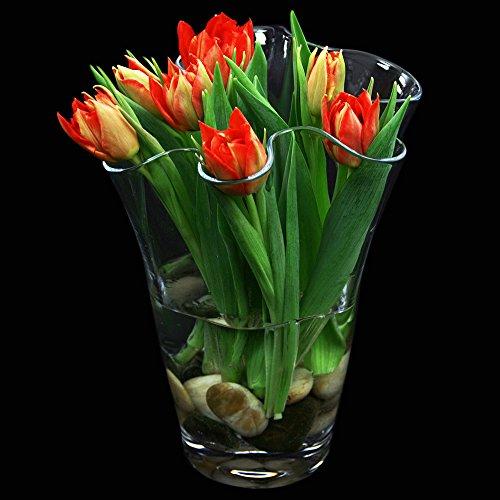 Glas-boden-vasen (Glas Vase Waja Höhe 25cm Ø ca.15cm. Blumenvase, Tulpenvase in geschwungener Form von Glaskönig)