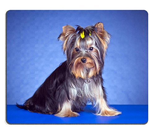 Mousepads Young Yorkshire terrier su sfondo blu Image ID 19421669by Liili Customized Mousepads Stain Resistance Collector kit Kitchen Table top Desk drink Customized Stain Resistance Collector kit Kitchen Table top