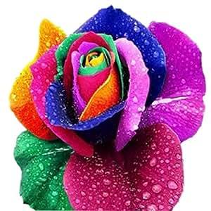 Brightup 100 Samen Regenbogen Rose Blumen Samen