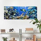 Glasbild - Underwater Reef - Panorama Quer, Wandbild, Glas Bild, Druck auf Glas, Glasdruck, Größe HxB: 50x125cm