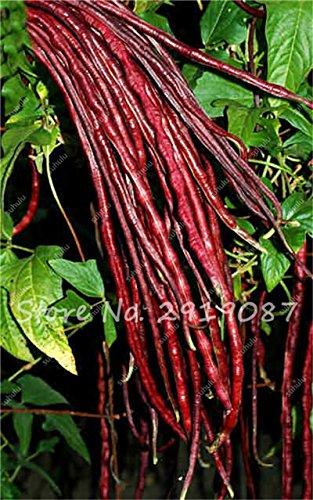 Vente Promotion! 5 Pcs mixte Graines long haricot Très facile d'intérêt Mini Garden Crochet d'or légumes biologiques en santé Graden plantes 21