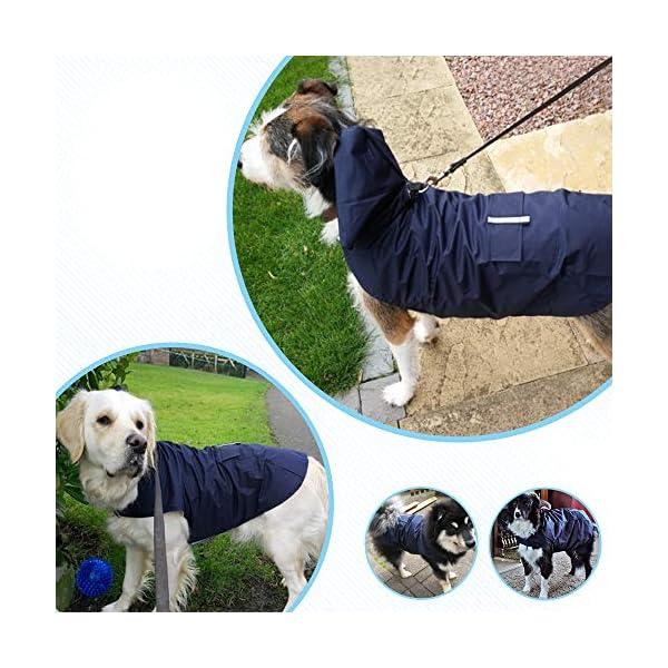 Zellar Dog Raincoat 6