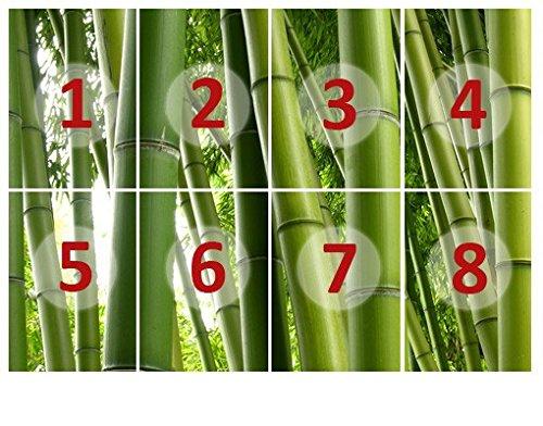 Bilderwelten fotomurale - con colla no.1 paradise of bamboo 400x280cm wallpaper, carta da parati, bambú, bosco, asia, legno, economica, verde