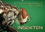 Die geheimnisvolle Welt der Insekten (Wandkalender 2017 DIN A2 quer): Faszinierende Nahaufnahmen von verschiedenen Insekten (Monatskalender, 14 Seiten) (CALVENDO Tiere)