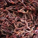 Lombric 500gr de vers de Compost dans 1kg de substrat de...