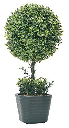 Galleria fotografica Verdemax 569546cm Ligustro pianta in vaso di ceramica