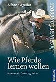 Wie Pferde lernen wollen: Bodenarbeit, Erziehung und Reiten