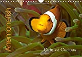 Anemonefish (Wall Calendar 2018 DIN A4 Landscape): Cute and Curious (Monthly calendar, 14 pages ) (Calvendo Animals)