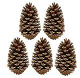 Pinus Maritima Zapfen 10-15 cm Deko Maritimazapfen natur getrocknet sauber (5er Set)