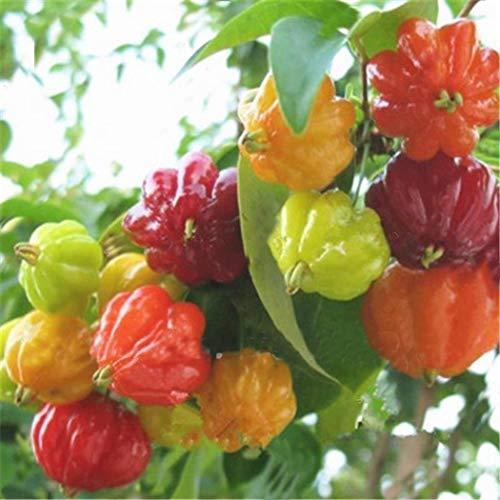 Ultrey Samenshop - 100 Stück Selten Veredelte Paprika-Mix F1 Bio Paprikasamen Gemüsesamen aromatisch ertragreich mehrjährig winterhart für Garten Balkon/Terrasse