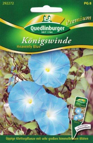 Königswinde, Heavenly blue