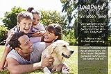 Hochwertige Profi-Hundepfeife | +3 x BONUS: Zahnpflege-Ball, Umhänge-Band & Ebook Hundetraining | Ultraschall, Hochfrequenz Verstellbar & leise | ideal um Bellen zu stoppen | 100% Geld-zurück-Garantie - 9