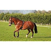 Cwell Equine Ayuda para el almuerzo de caballos, color negro, talla única (negro)