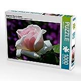 Englische Rose im Garten 1000 Teile Puzzle quer (CALVENDO Natur)