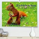 Eichhörnchen. Wo sind bloß die Nüsse?(Premium, hochwertiger DIN A2 Wandkalender 2020, Kunstdruck in Hochglanz): Die flinken Kletterer und Nüsseknacker ... (Monatskalender, 14 Seiten ) (CALVENDO Tiere)