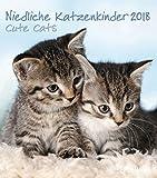 Niedliche Katzenkinder 2018 - Katzenkalender, Tierkalender, Wandkalender, Posterkalender - 30 x 34 cm