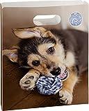 BRUNNEN Fans of Earth Hund, Heftbox , 25 x 31 x 5 cm Für A4 Hefte und Schnellhefter