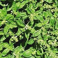 FES Quintessentials Flower Essences Services Basil 30ml Dosage by Natures Wisdom preisvergleich bei billige-tabletten.eu