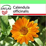 SAFLAX - Garden to Go - Botón de oro - 50 semillas - Calendula officinalis