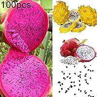 AchidistviQ 100 Unids Color Mezclado Pitaya Semillas Deliciosa Fruta Bonsai Planta Home Garden Semillas Pitaya