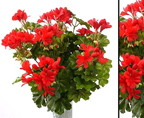Geranien Kunstblume mit 116 rote Blüten, Höhe und Durch. ca. 40cm – Kunstpflanze künstliche Blumen Kunstblumen Blumensträuße künstlich, Seidenblumen oder Blumen aus Plastik