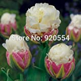 100% Véritable, 5pcs / lot Tulip 'Ice Cream', Tulipa bulbes (pas les graines de tulipes) bonsai usine jardin de jardin T01