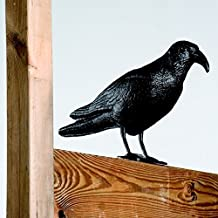 Megaprom XL 42cm Corvo Corvo allontanamento Piccioni Spaventapasseri repellente per uccelli Vogelscheuche uccelli protezione repellente per piccioni decorativa da giardino