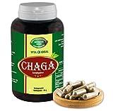 Chaga Pilz Extrakt Pulver 180 Kapseln je 380mg ohne Zusatzstoffe