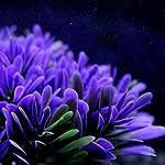QHGstore Aquarium Decoration Artificial Water Plant Grass Plastic Purple Plant Fish Tank Landscape Ornament Decor 16