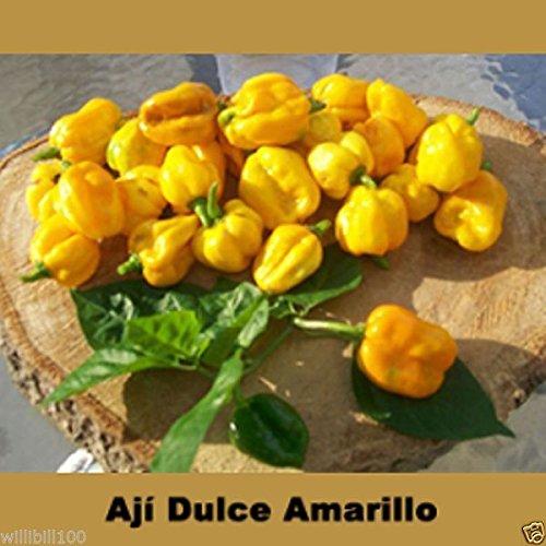 Aji Dulce Amarillo, Pfeffersamen, Gelb Aji Dulce (C.chinense) aus Venezuela.