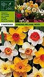 Narcissus - Narzissen Osterglocken MIX