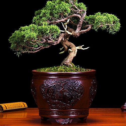 Dekorative Design Keramikplatten Pflanze Blume Pflanzer Töpfe,Vergleich von Mit Kunststoff Pflanzer,Unsere Pflanzer Sind Stärker Als Kunststoff,Und Mit Long Service Leben -A kleine