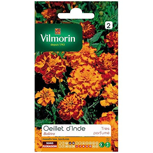 Vilmorin - Sachet graines Oeillet d'inde Boléro