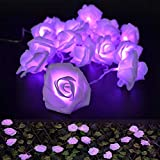 2m 20 Rose Blumen LED Lichterkette Romantische Party Indoor Decor Batterie Power Schlafzimmer Hochzeit Foto Garten Hängen Weihnachten Weihnachten Valentinstag Dekoration (Lila)