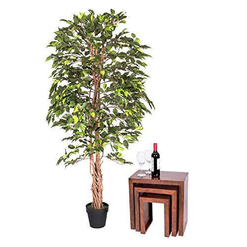 Homescapes - 6 Feet Ficus Tree -...