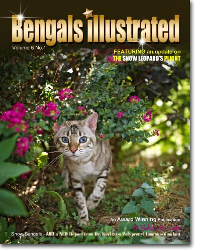 Bengals Illustrated, Bengal cats, Hail to Snow