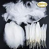 Vidillo Bunte Federn, Stück Weiß Gänsefedern, ideal als Dekoration zum Karnival für Halloween Fest Masken, Kostüme und Basteln für Kinder, Sicher und Ungiftig und Nicht verblassen