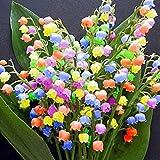 Yukio Samenhhaus - 100 Stück duftend Raritäten Maiglöckchen Blumensamen Multifarben winterhart mehrjährig