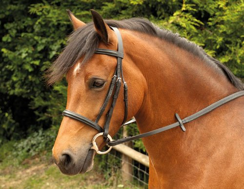 Windsor Zaumzeug, Trense mit gepolstertem Reithalfter und Stirnband, für Pferde