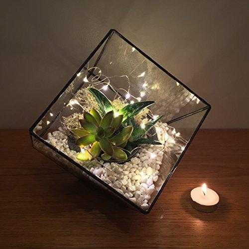 23cm High Cube Terrarium With Live Succulent Plants And Led Fairy