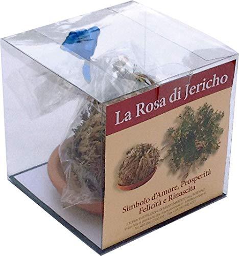 Rosa de Jericó con Cuenco Especial