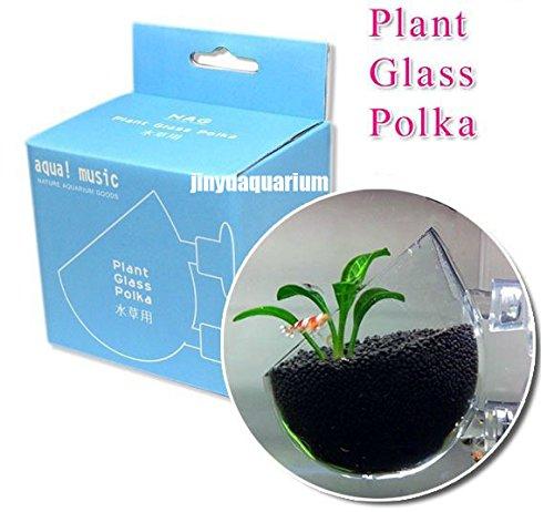 nag-pot-en-verre-a-eau-plante-en-pot-grow-paysage-ada-eau-plante-pour-aquarium-reservoir