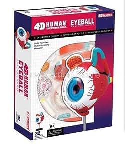 4D MASTER médicale Oeil humain Modèle anatomique Sciences 32 parties Livraison gratuite
