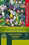 mgc24® Blumenzwiebelmischung zur Verwilderung - 200 Blumenzwiebeln