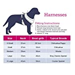 Doodlebone Airmesh Dog Harness, Charcoal, X-Small 2
