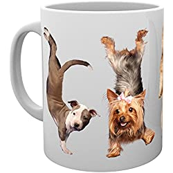 GB eye LTD, Yoga, Dogs 4 Dogs, Taza