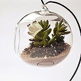 Dia. 4 Pollici Bottiglia Appesa Vetro Trasparente Vaso Per Decorazioni Floreali Impianto
